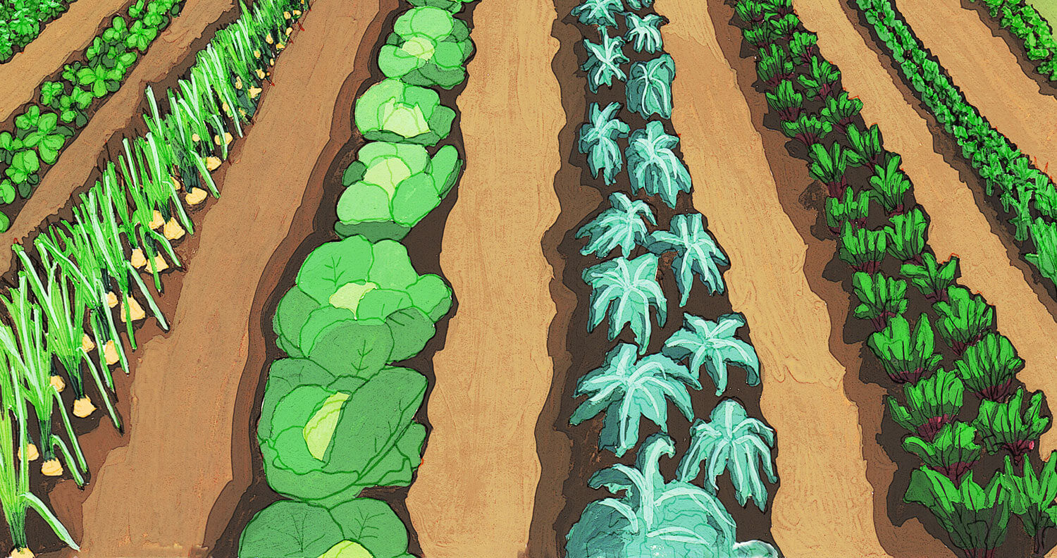 Gouache and ink of vegetable rows