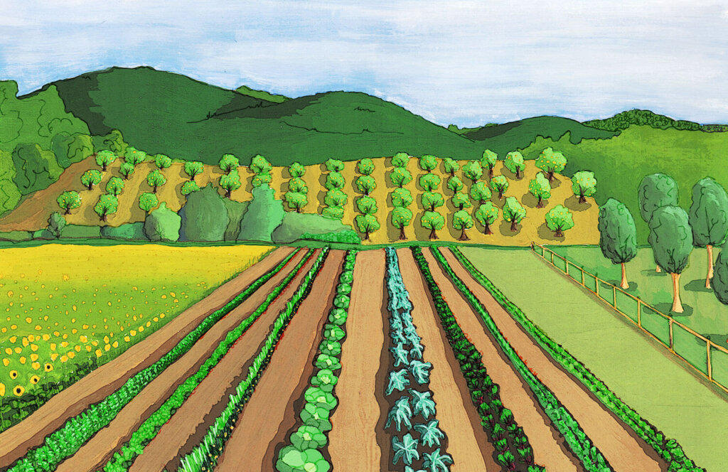 Gouache and ink of farm fields